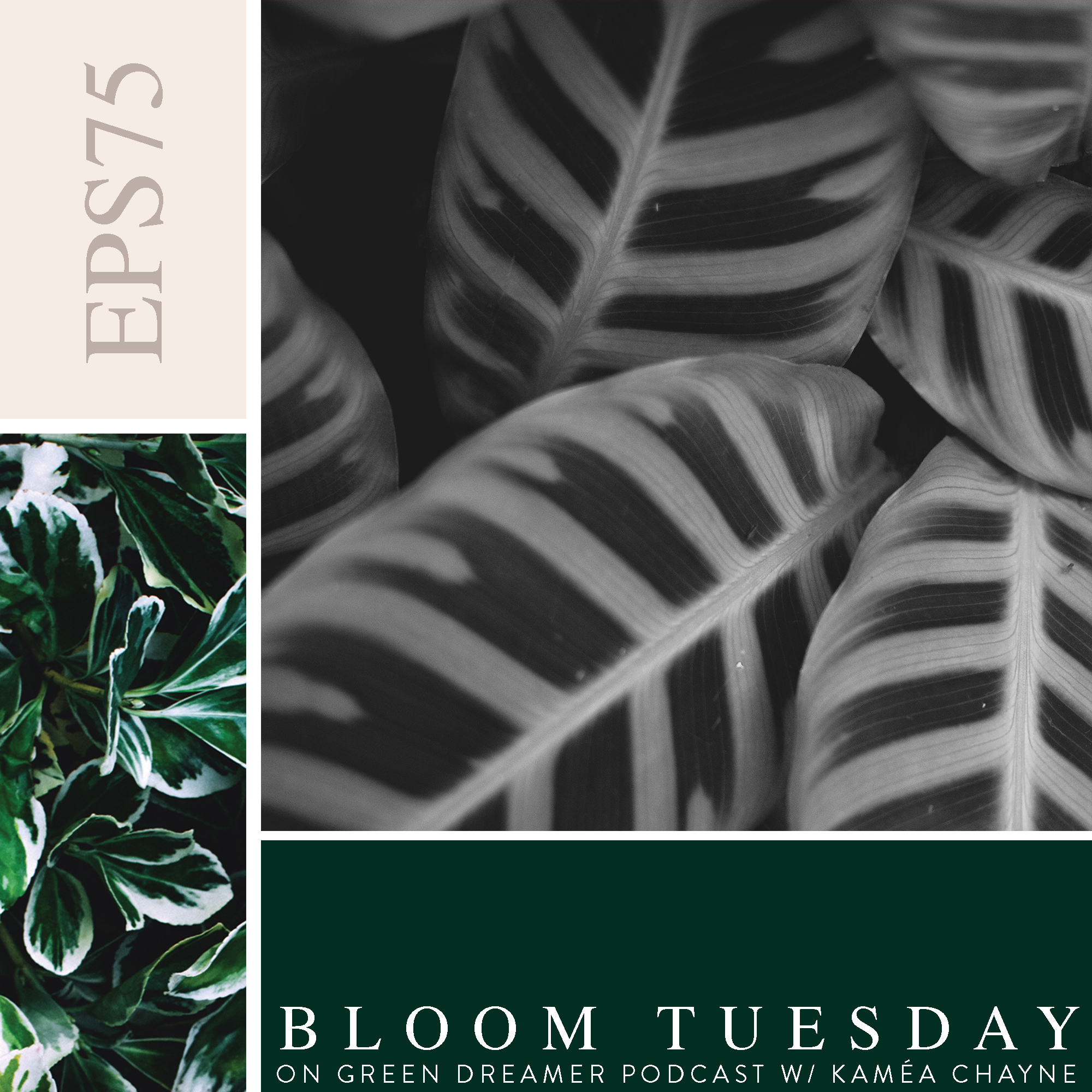 75) BLOOM TUESDAY