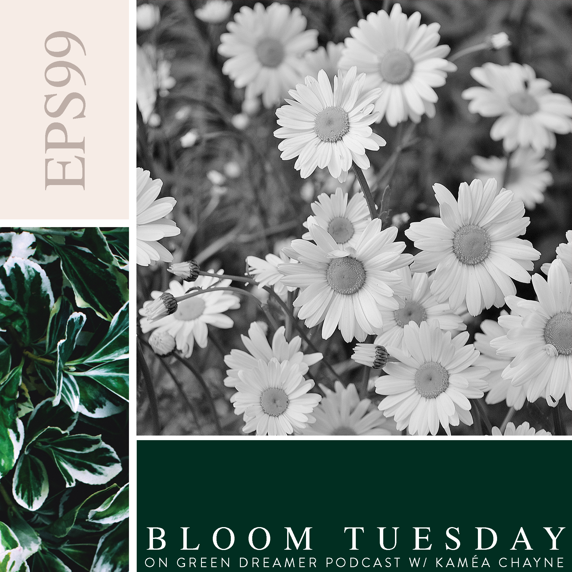 99) BLOOM TUESDAY