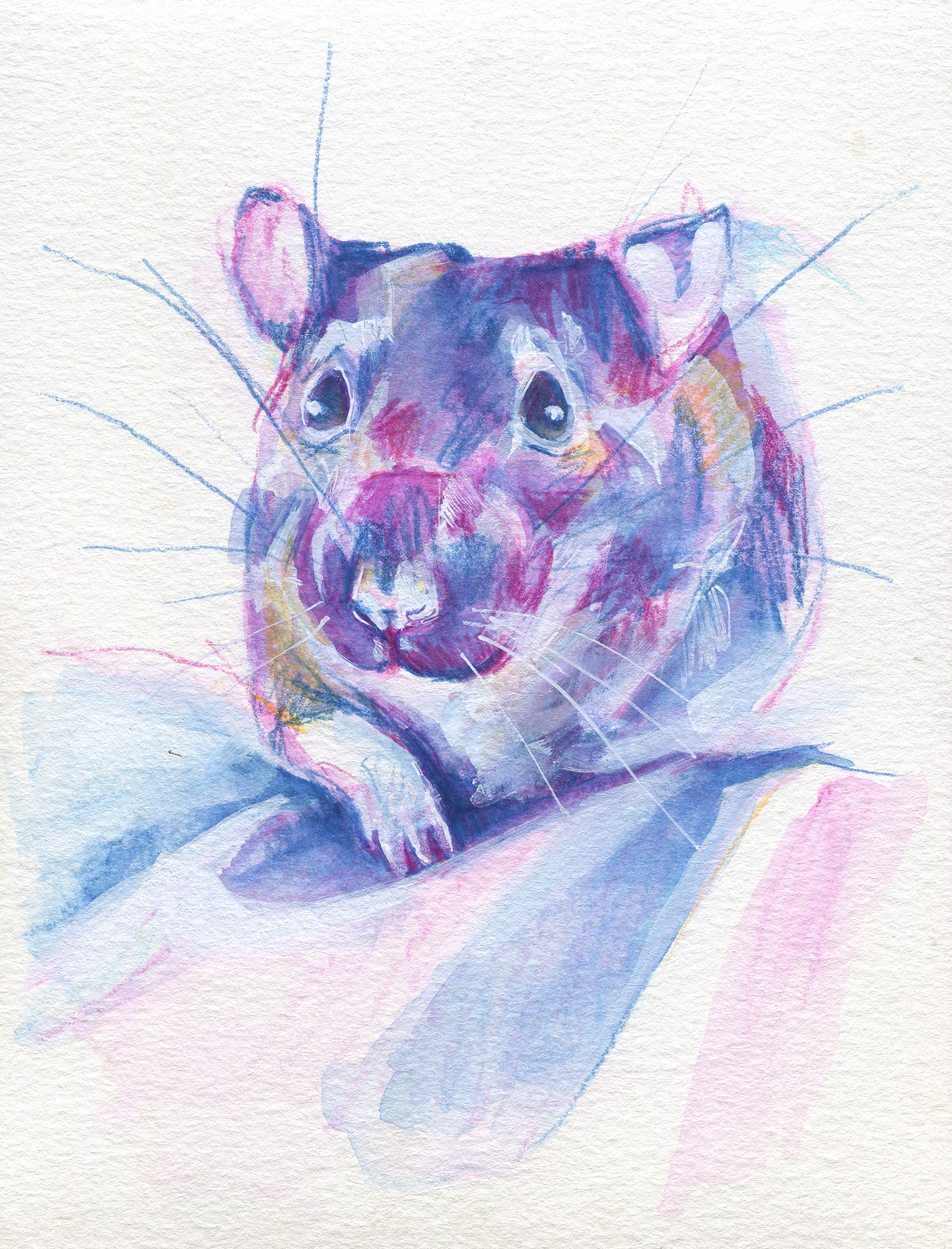 The100RatProject 017/100