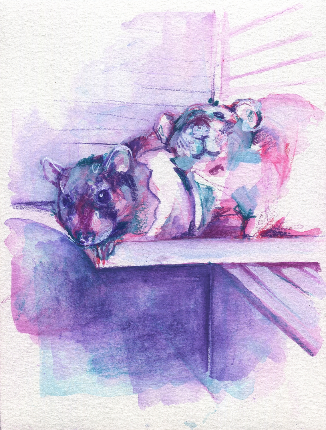 The100RatProject 004/100