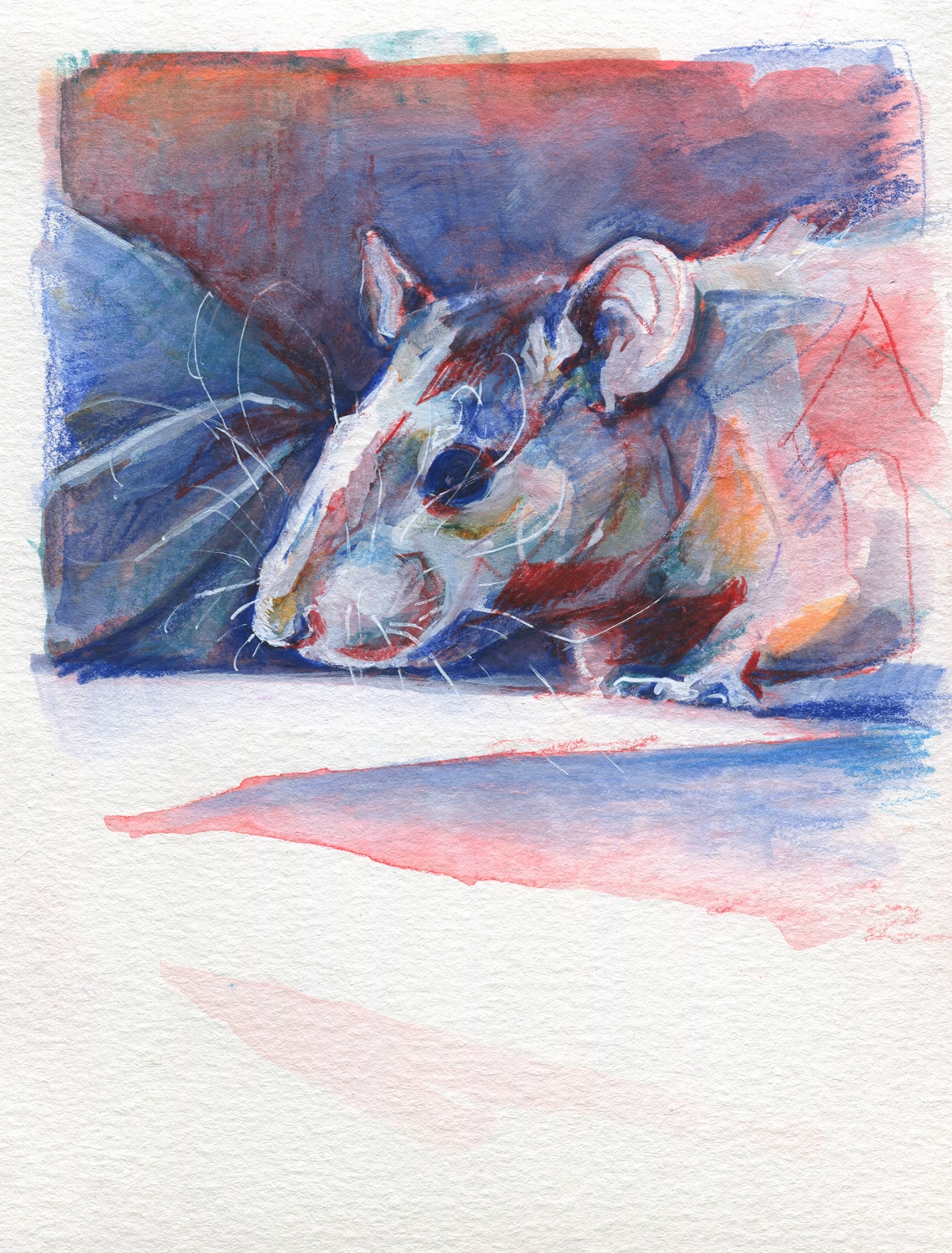 The100RatProject 008/100