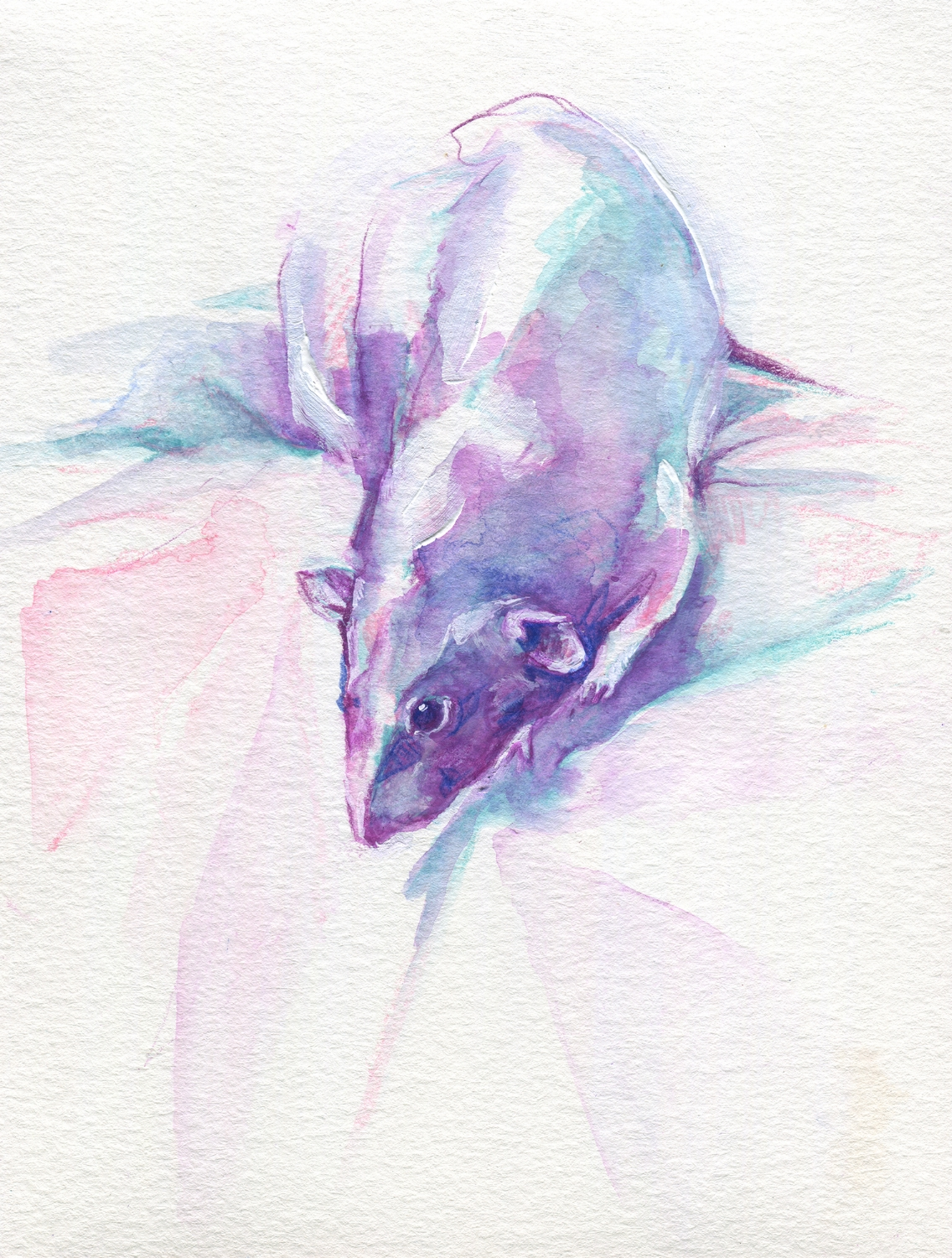 The100RatProject 007/100