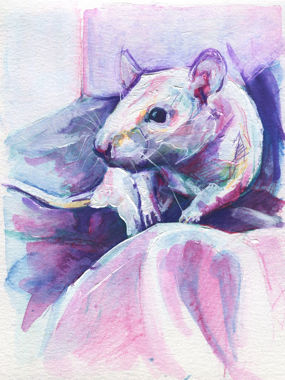 The100RatProject 013/100