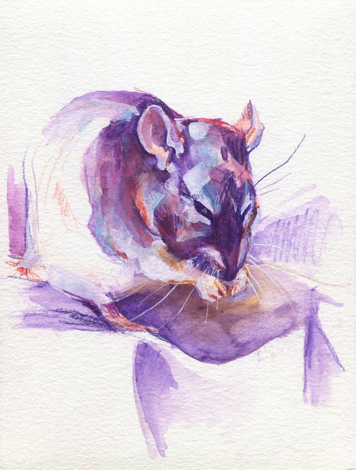 The100RatProject 016/100