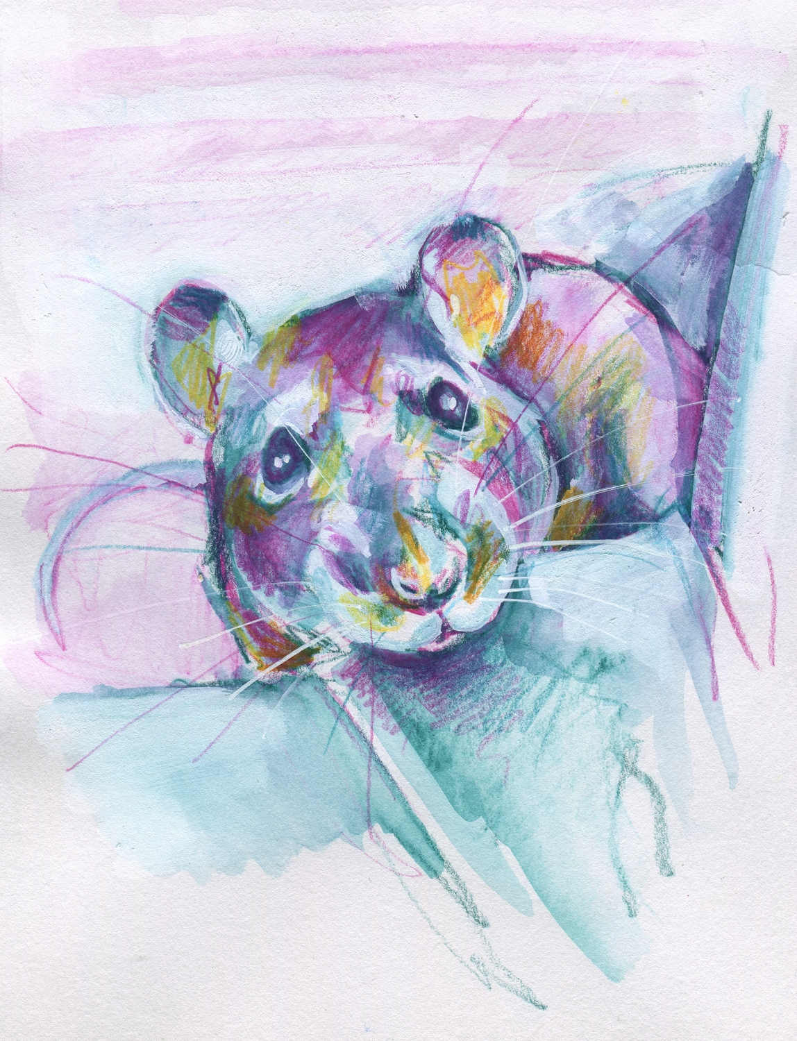 The100RatProject 018/100