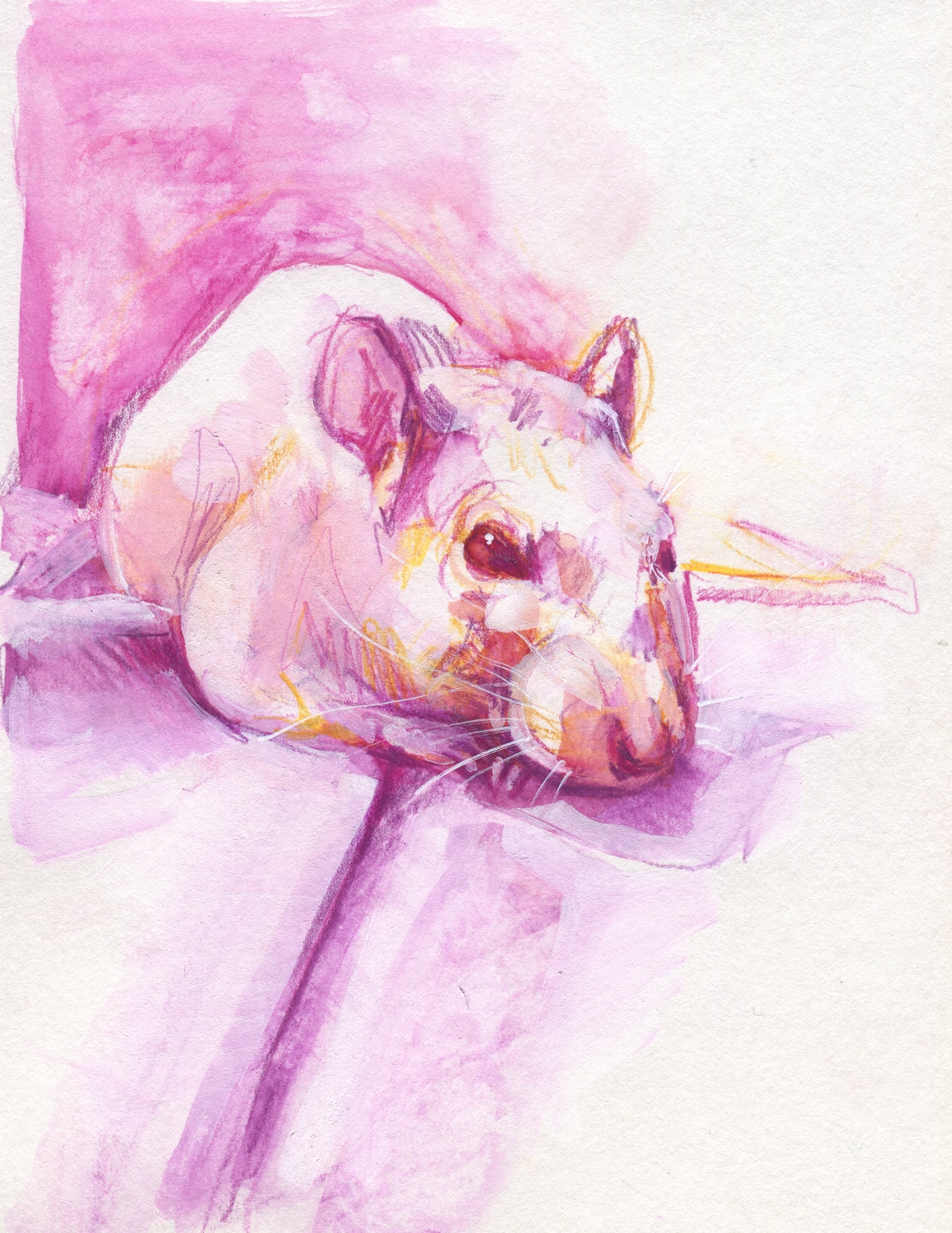 The100RatProject 019/100