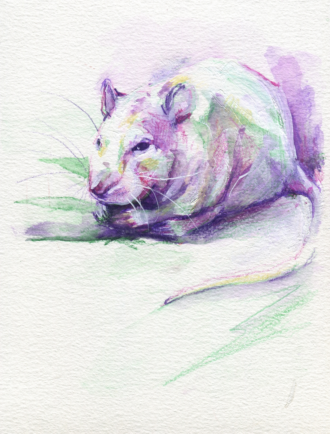 The100RatProject 023/100