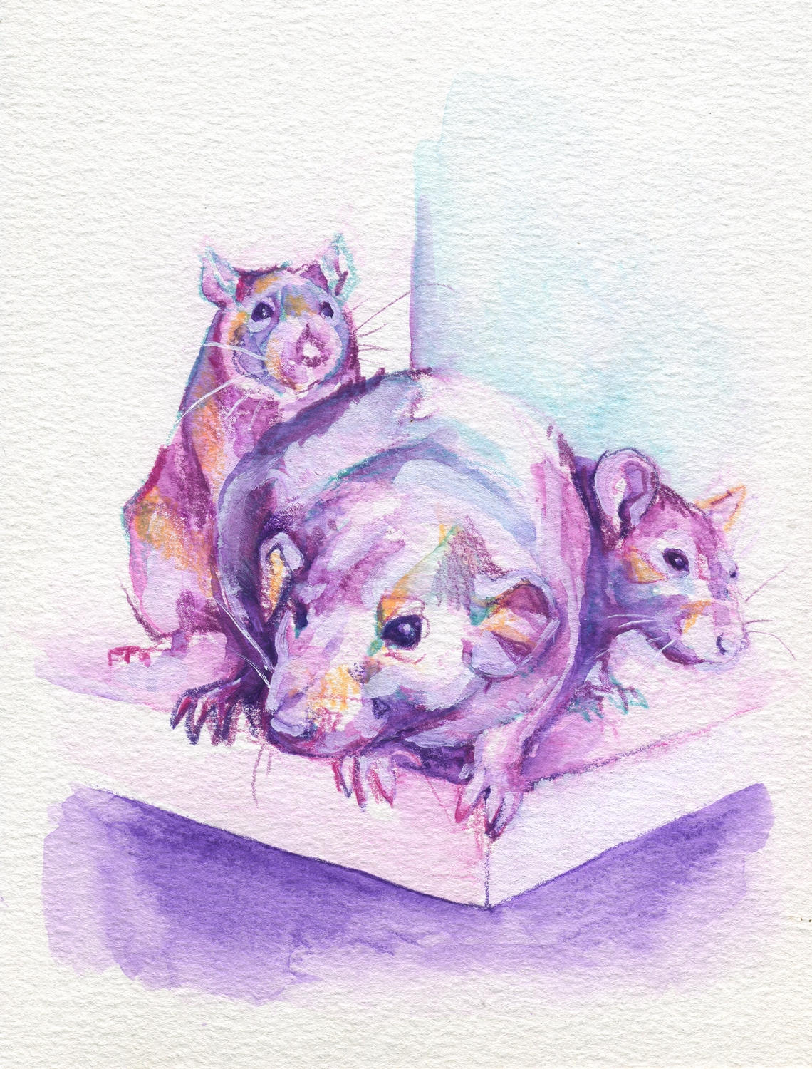 The100RatProject 029/100