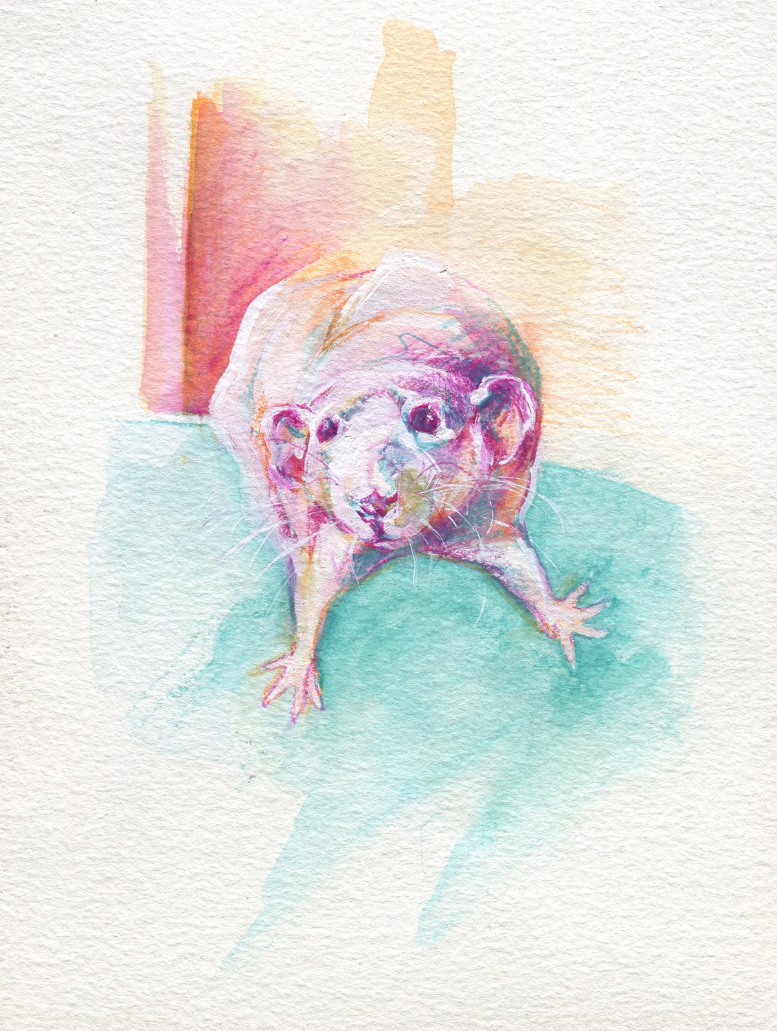 The100RatProject 030/100