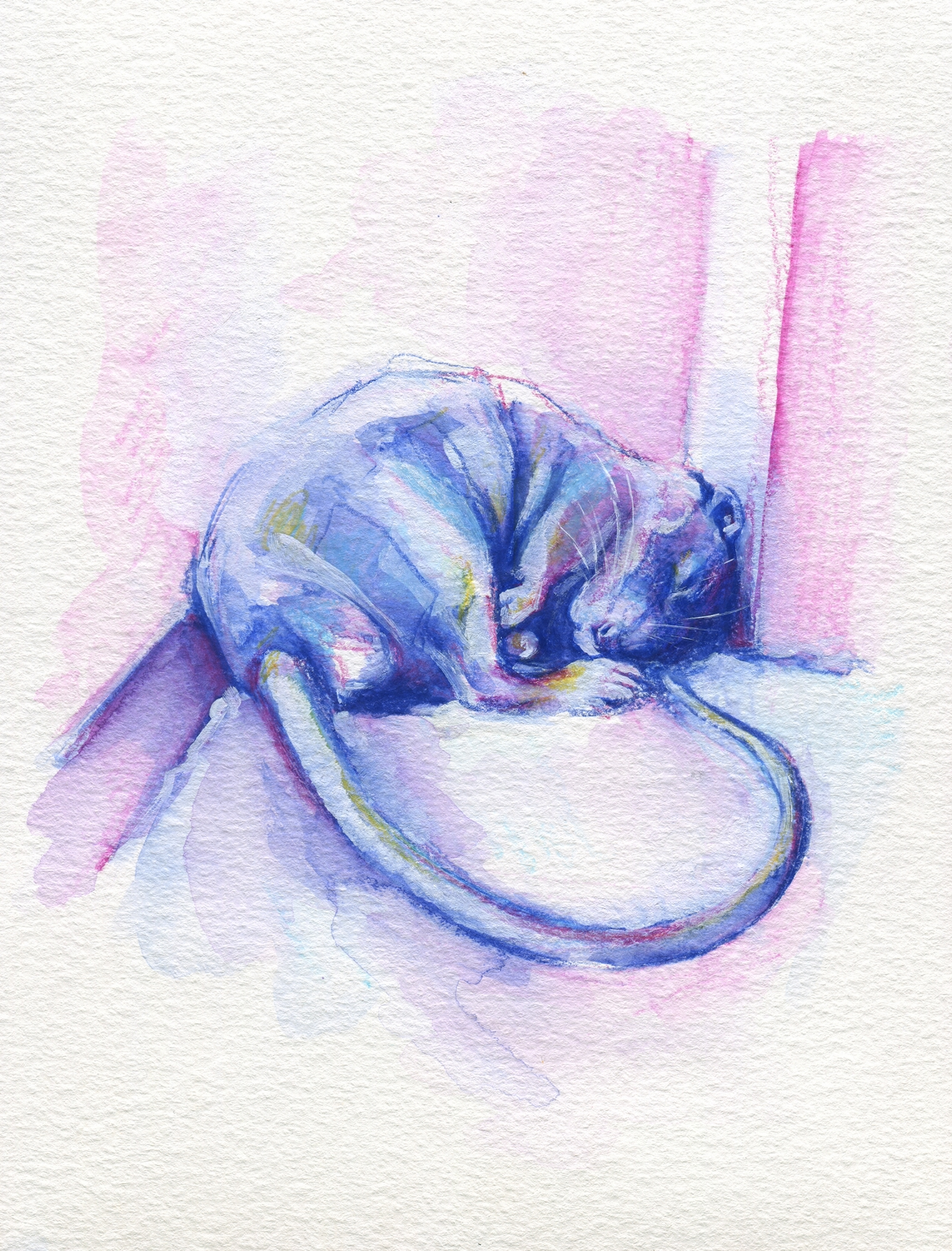 The100RatProject 032/100