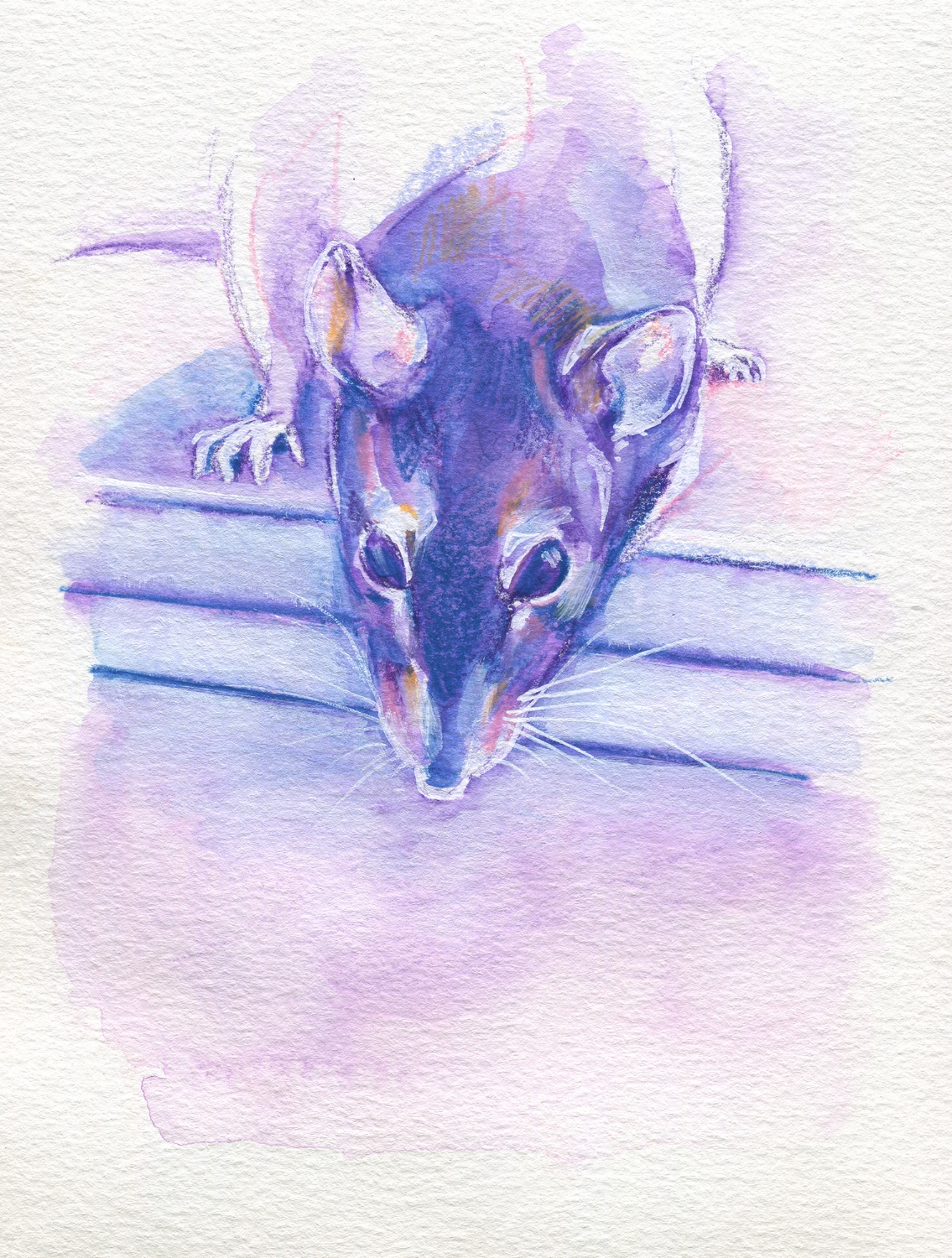 The100RatProject 039/100