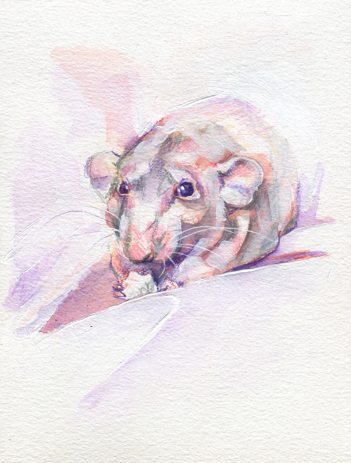 The100RatProject 043/100