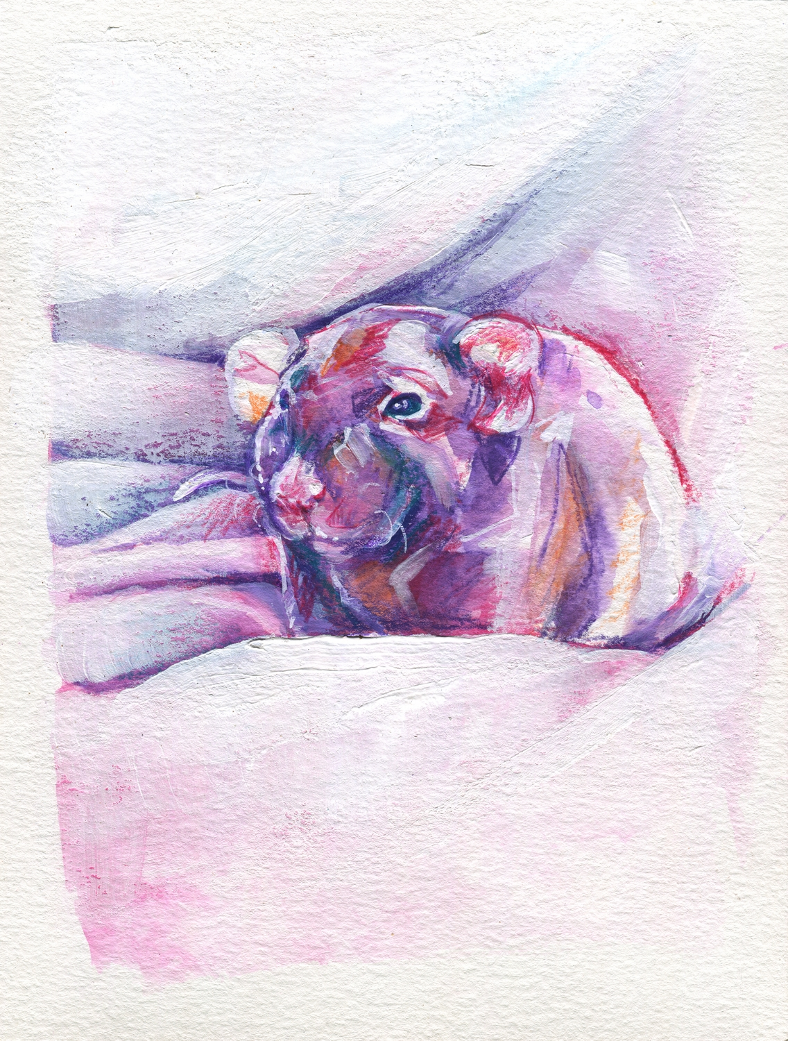 The100RatProject 046/100