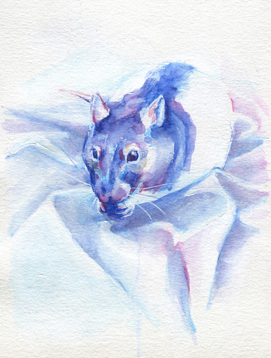 The100RatProject 050/100