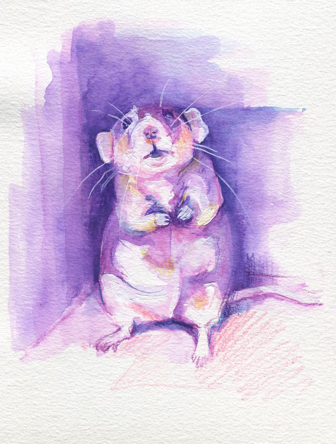 The100RatProject 054/100