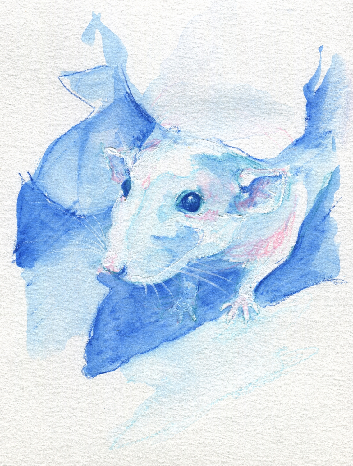 The100RatProject 056/100