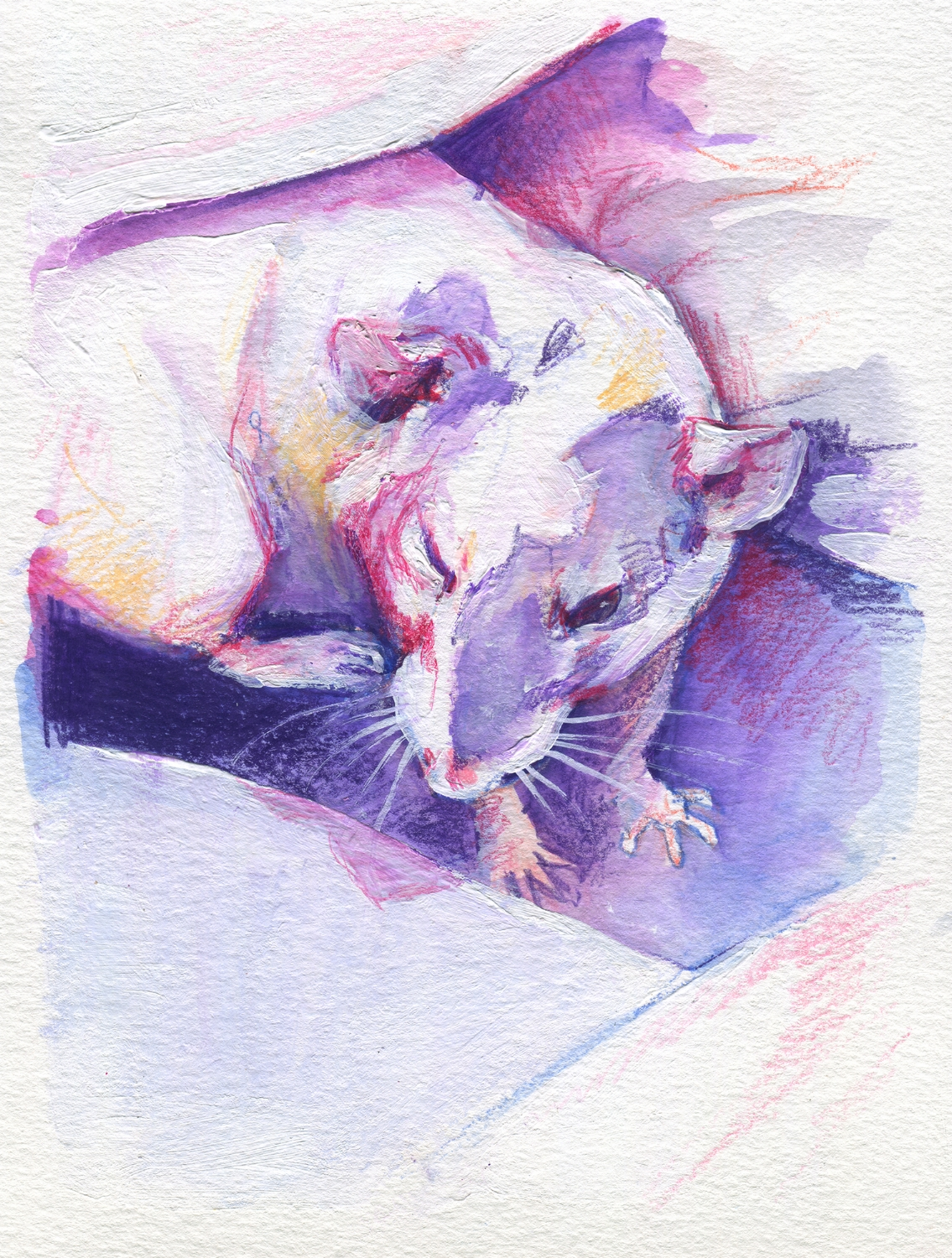The100RatProject 057/100