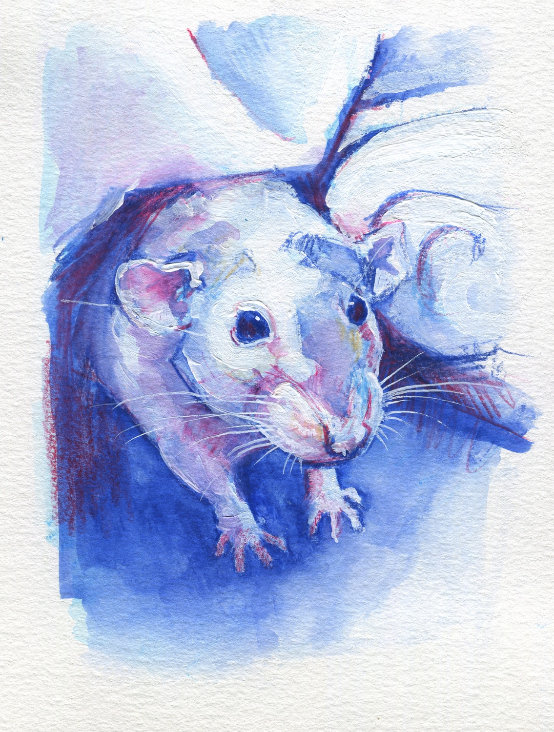 The100RatProject 058/100