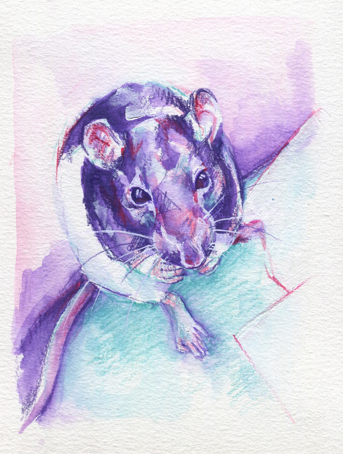 The100RatProject 061/100