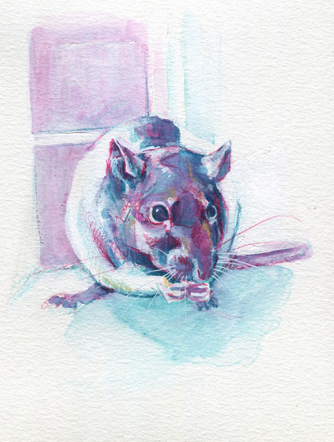 The100RatProject 064/100