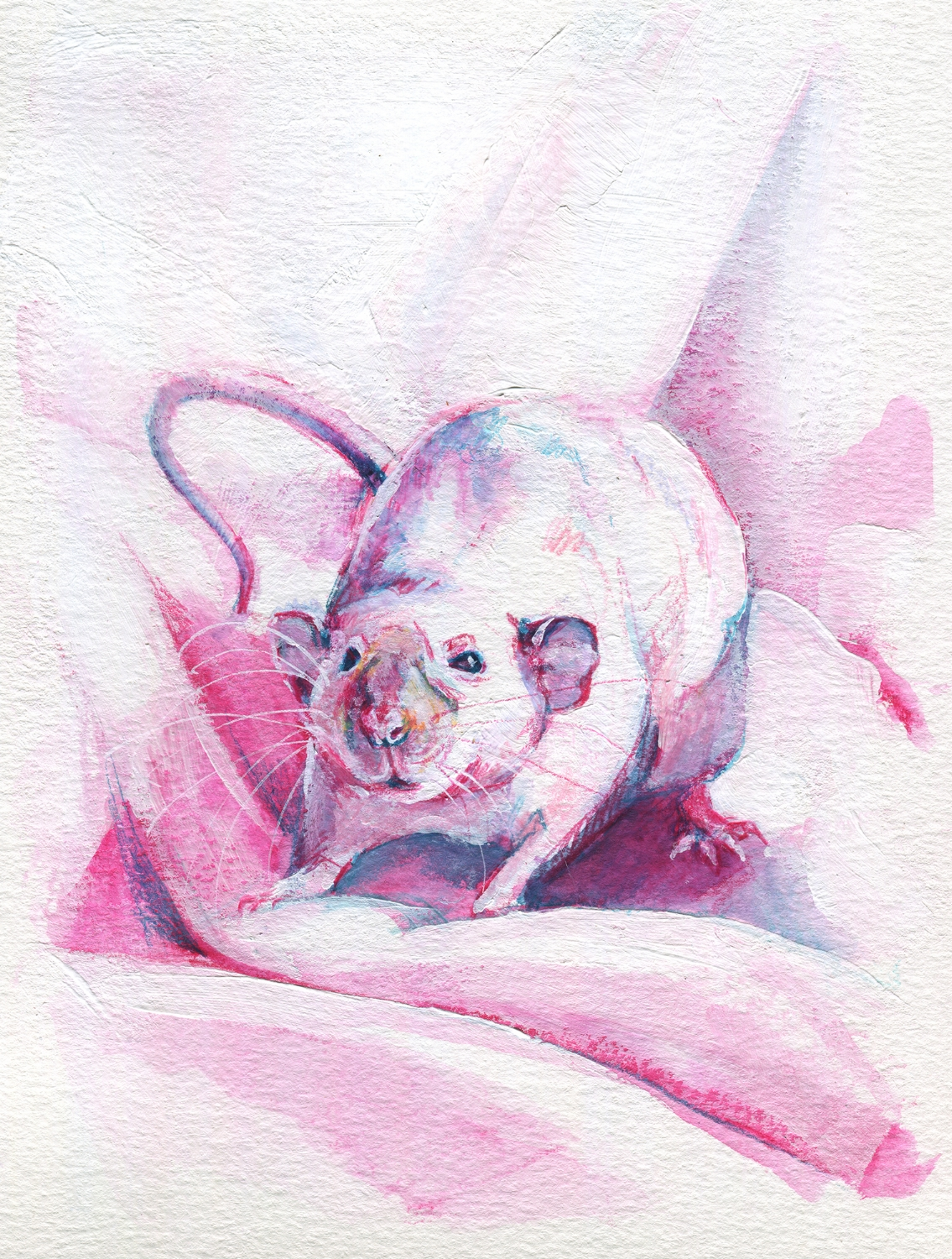 The100RatProject 065/100