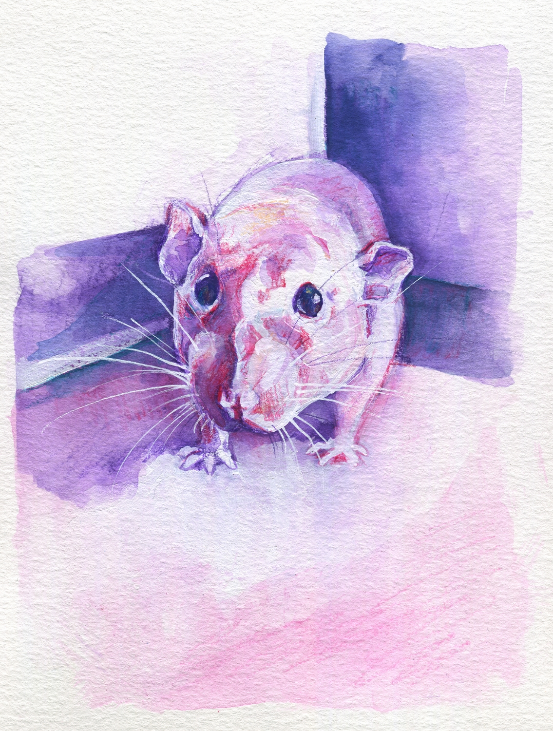 The100RatProject 069/100