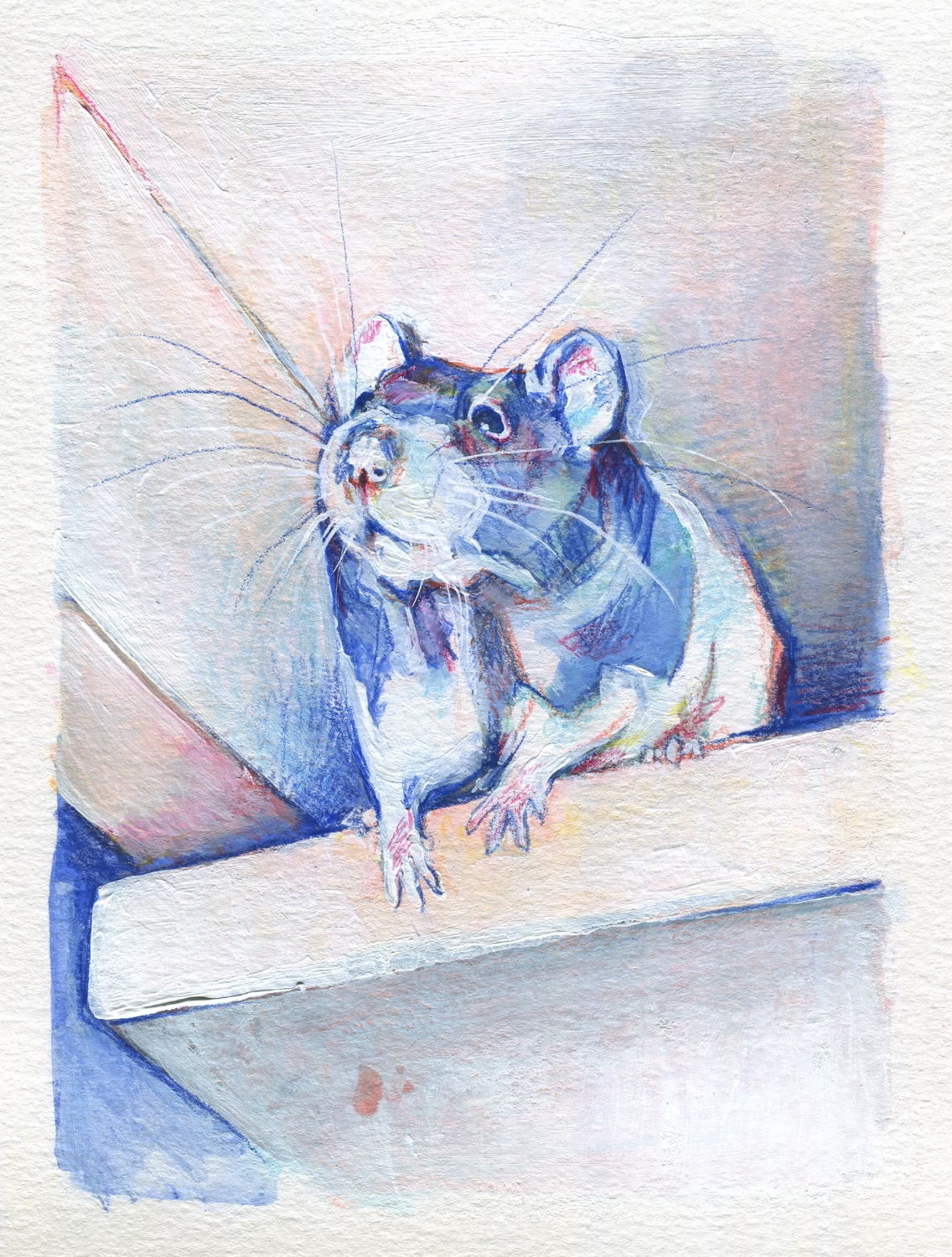 The100RatProject 071/100