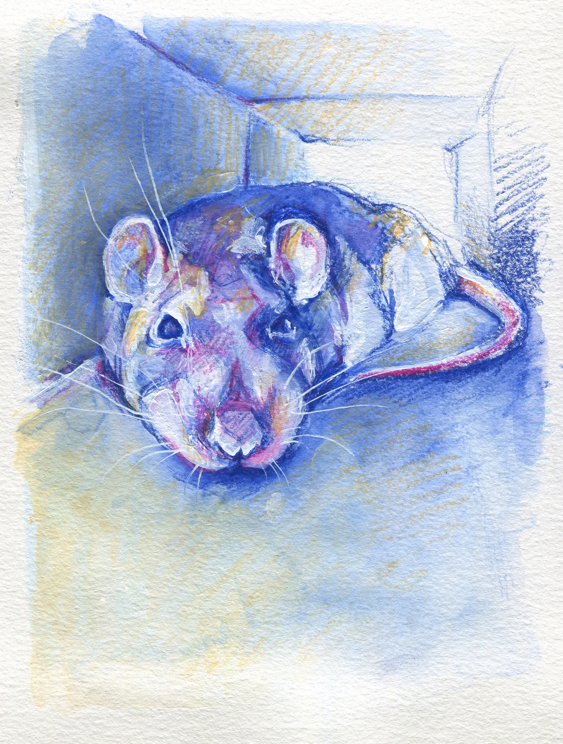 The100RatProject 073/100