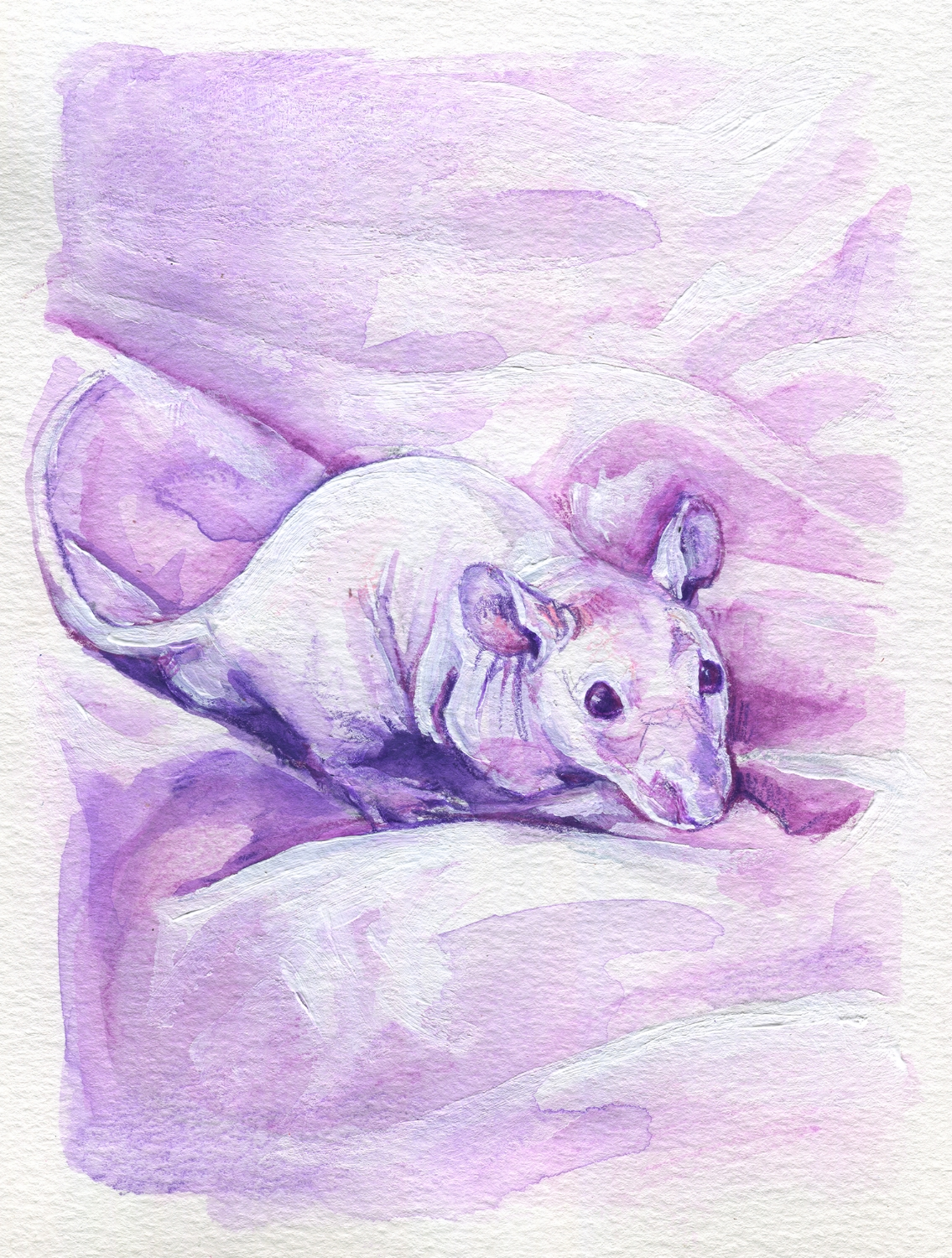 The100RatProject 075/100