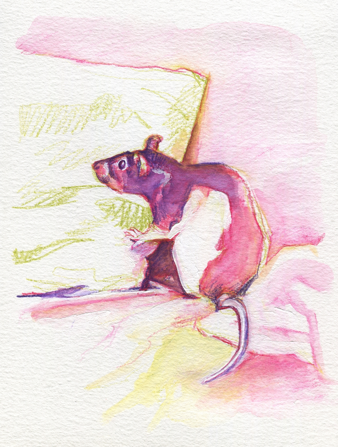 The100RatProject 076/100