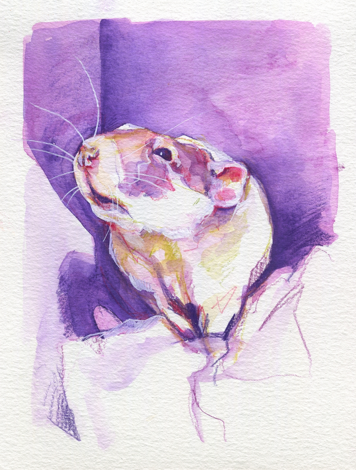 The100RatProject 081/100