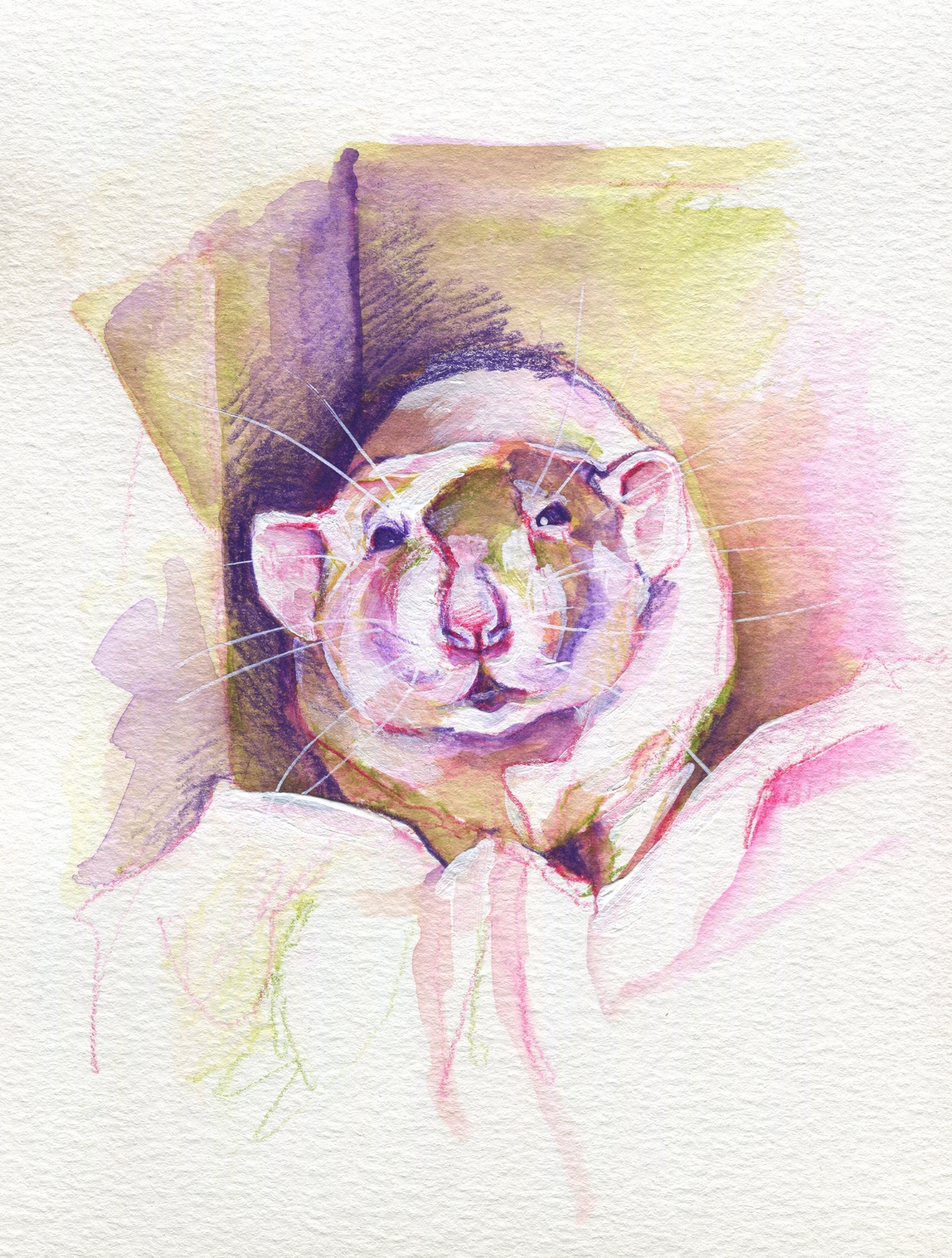 The100RatProject 082/100