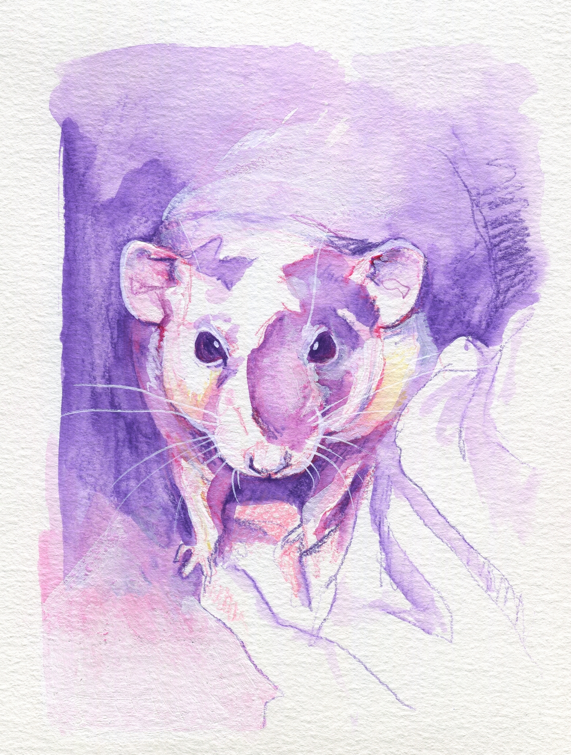 The100RatProject 083/100
