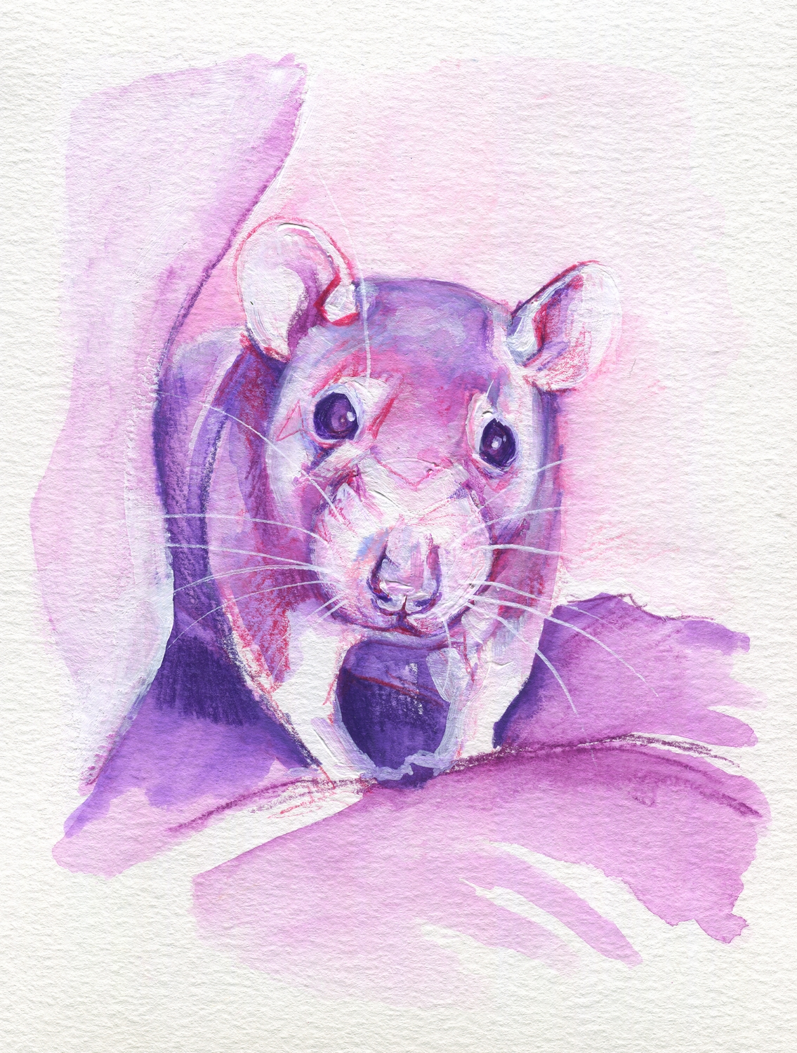 The100RatProject 085/100