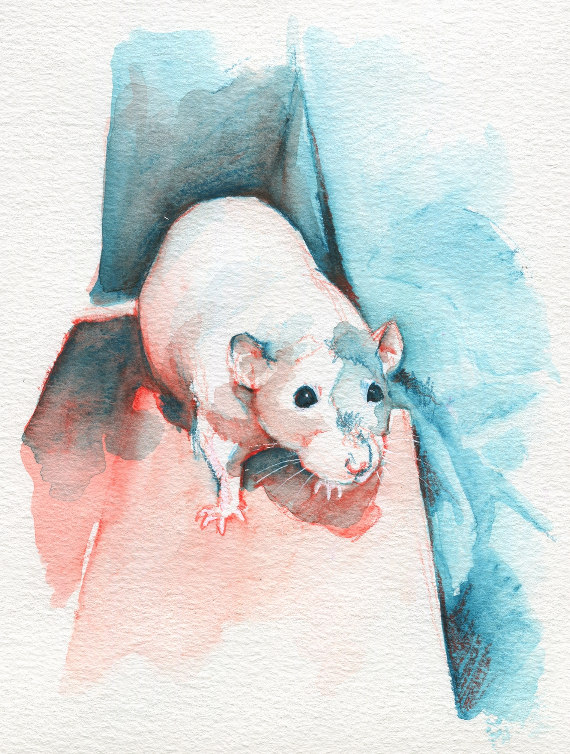 The100RatProject 087/100