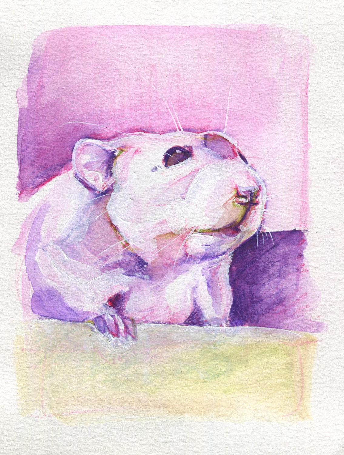 The100RatProject 092/100