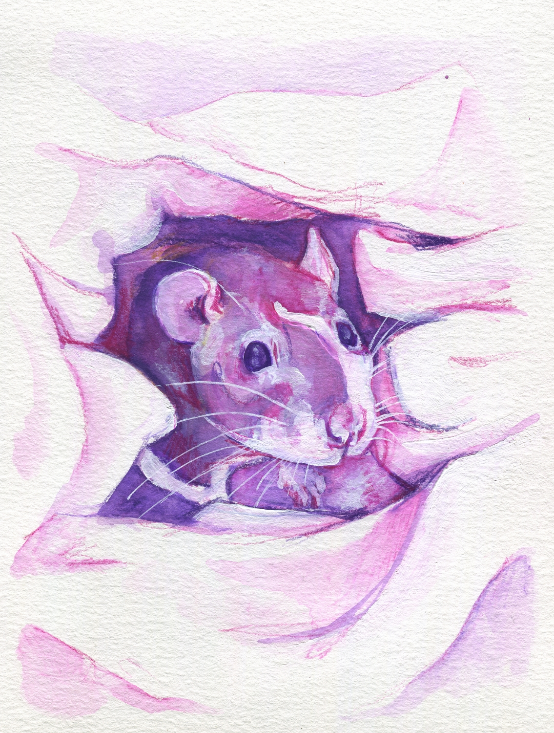 The100RatProject 099/100