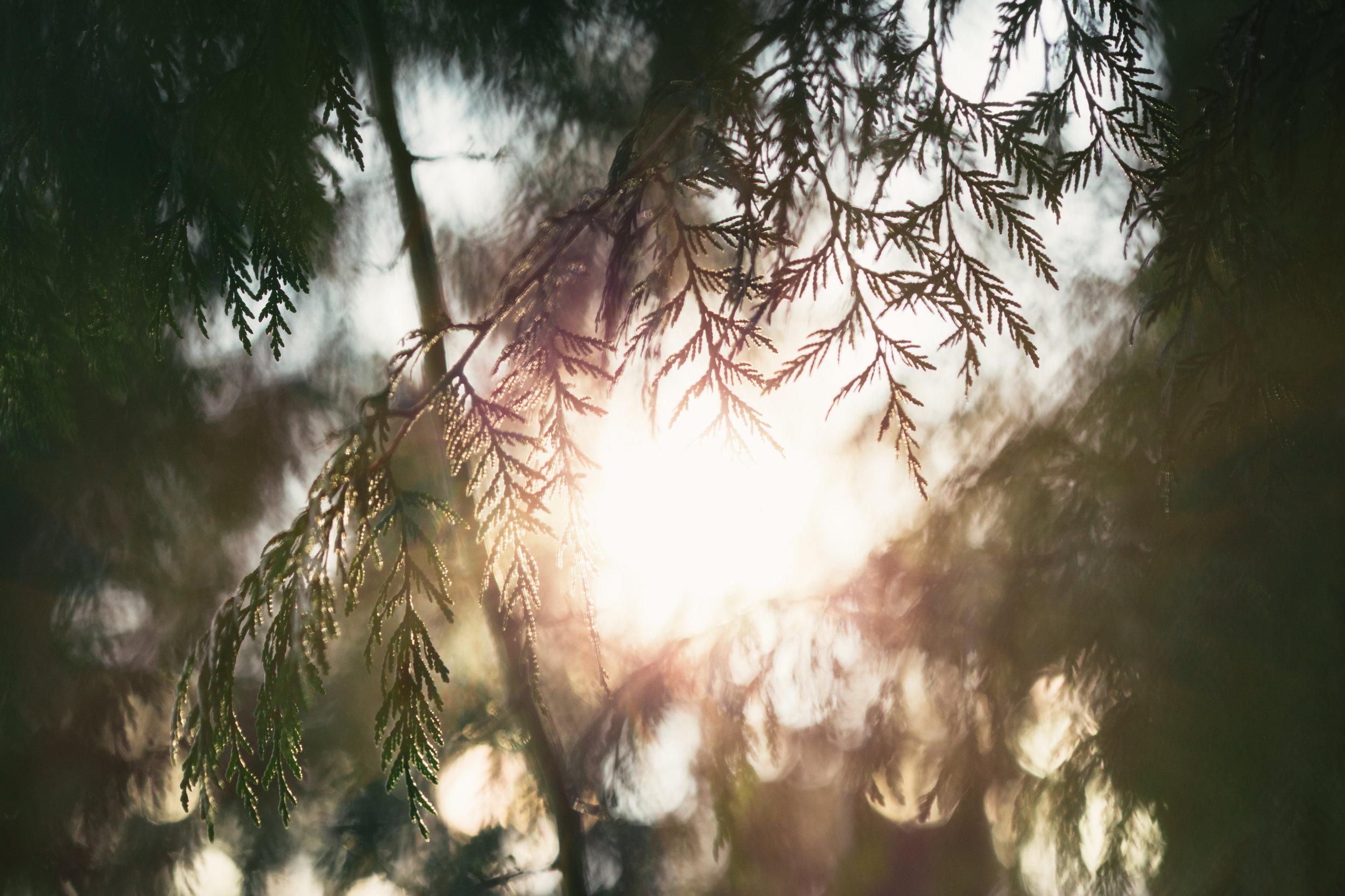 ESSENCE DE CEDRE DE VIRGINIE - Nom botanique : Juniperus VirginianaRégions productrices : Etats-Unis (Virginie et Texas)Famille Olfactive : BoiséeAdjectifs : terreux, résineux, crayon à papierNote de cœur-fond