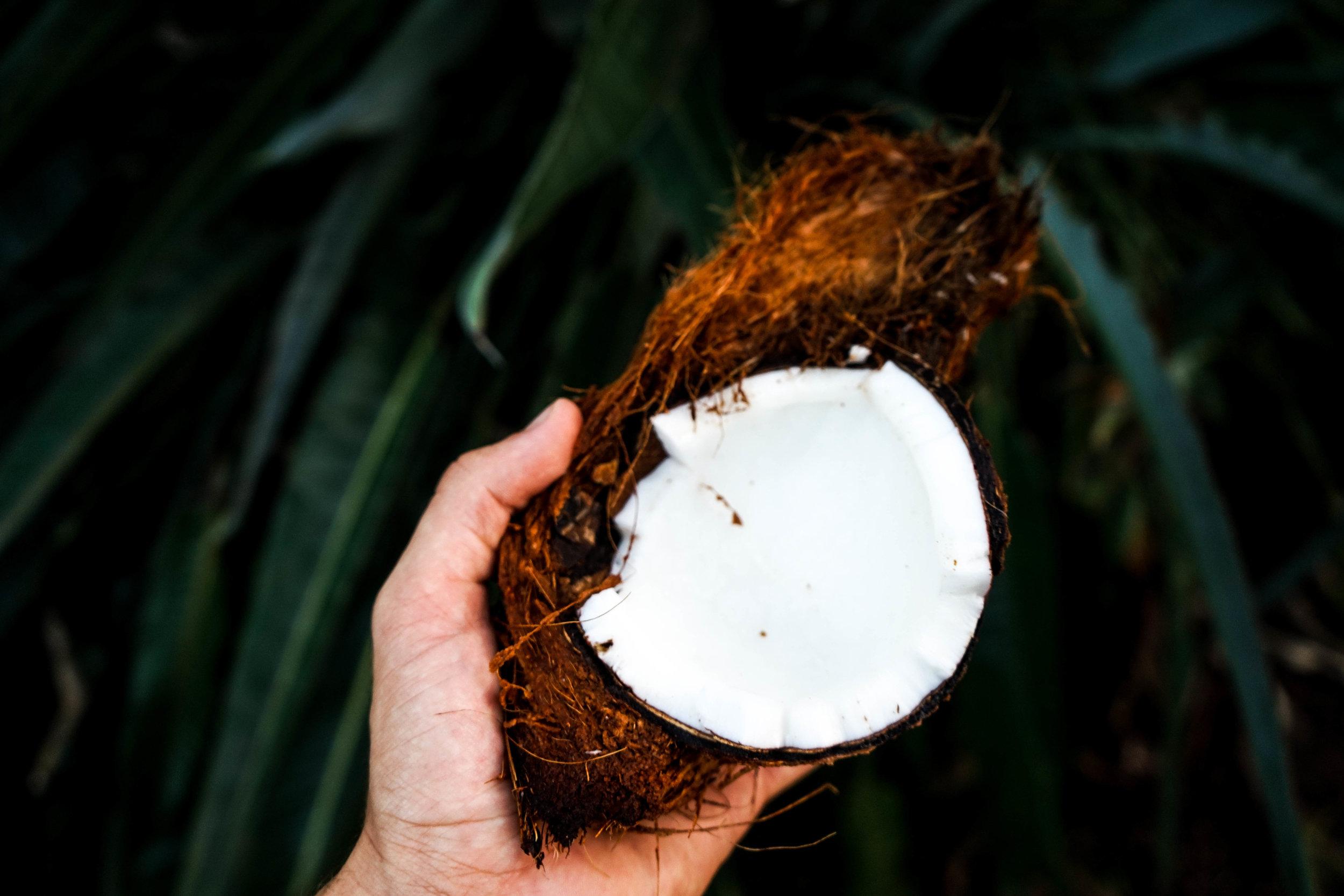La noix de coco   Jennifer utilise l'huile de coco dans plusieurs de ses recettes dont celle de ses fameux cookies... Elle est obtenue par extraction de sa pulpe et utilisée dans les cosmétiques comme pour le monoï, un macérat de fleurs de tiaré dans l'huile de coco.  En parfumerie on la recrée alors avec d'autres matières premières et notamment la gamma-nonalactone qui est naturellement présente dans la noix de coco. On utilise principalement cette note dans le fond des parfums féminins et dans les bougies d'ambiance pour apporter une facette gourmande, solaire et lactée s'associant avec les fruits exotiques.