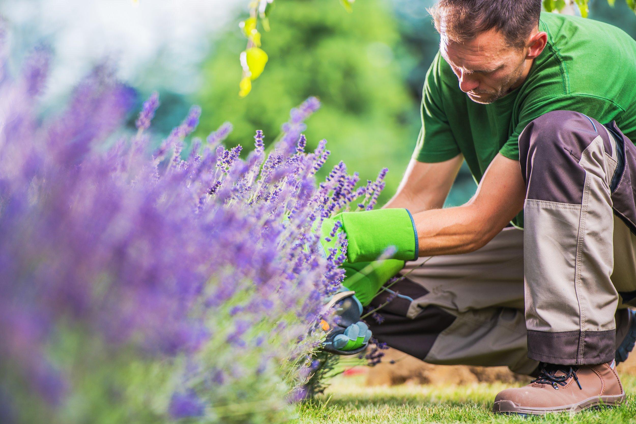 removing-garden-weeds-67PSLT3.jpg