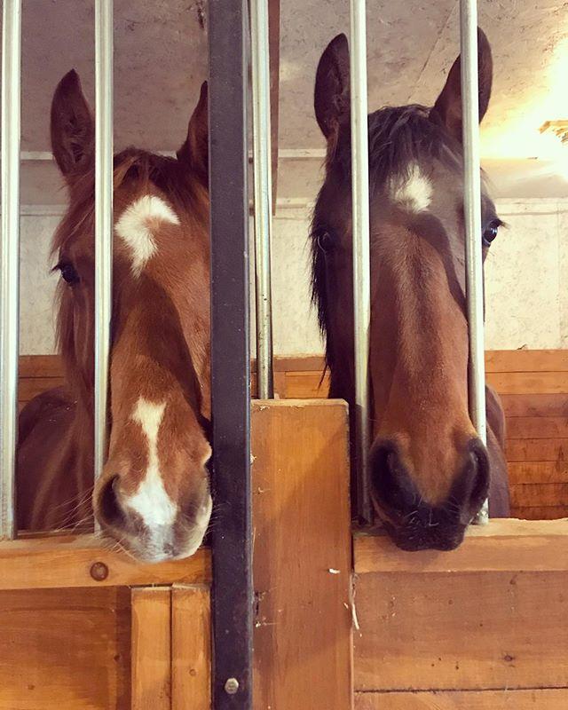 World's cutest sisters 👯🙈💚 • • • #lakehurstsporthorses #kwpn #kwpnna #fabregas #ugenius #krackc #sisters #fillies #horsesofinstagram #dressage #dressagehorse #dressur #pferd #equestrian #equestrianstyle #younghorse #futurestars #futurestar #breeder #rider #dutchwarmblood