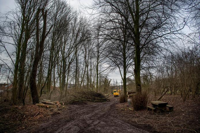 Er moeten ongeveer 20 bomen gekapt worden.