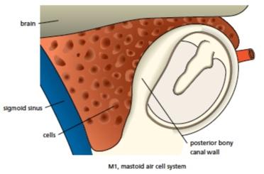 mastoid+anatomy.jpg