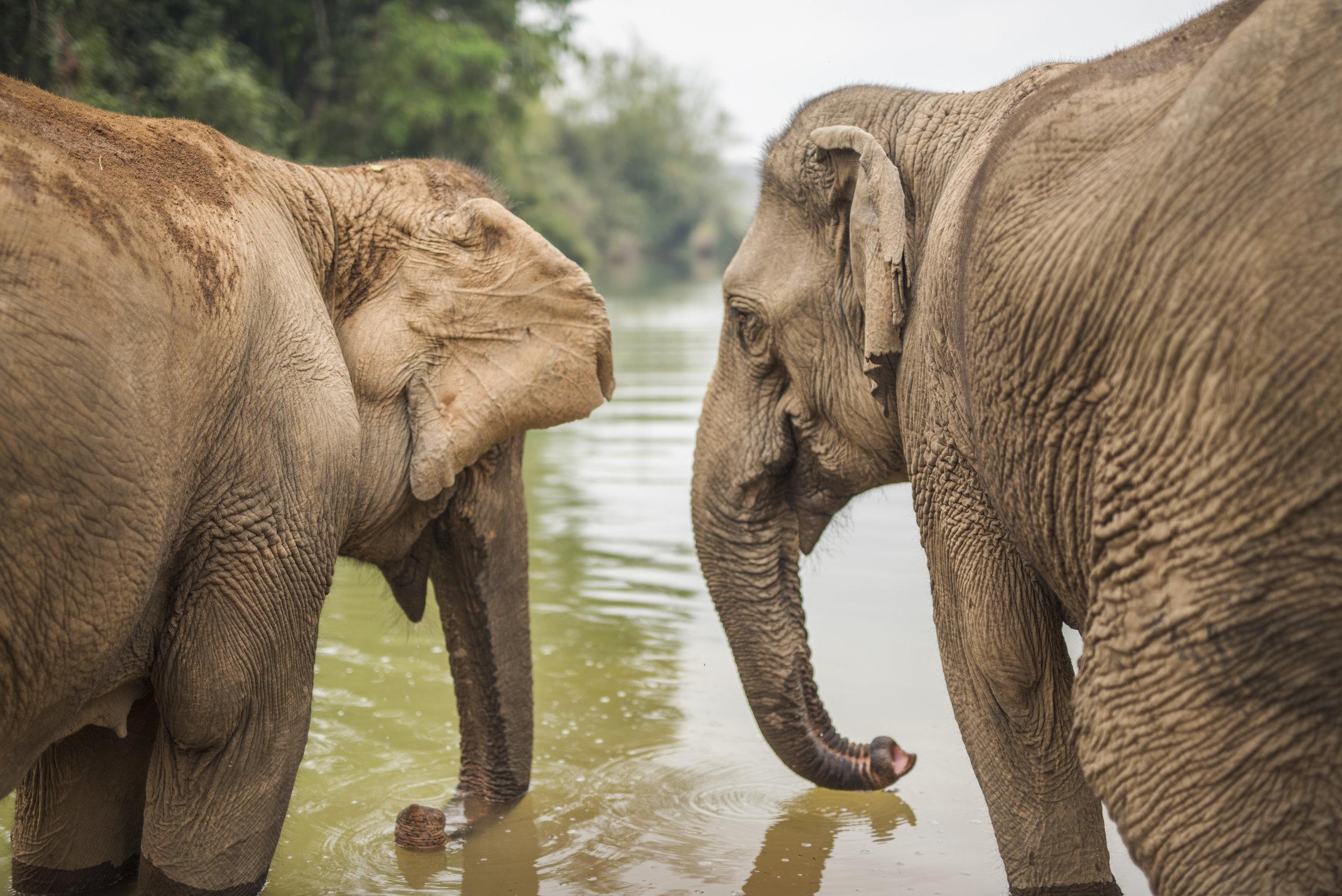 elephants (74).jpg