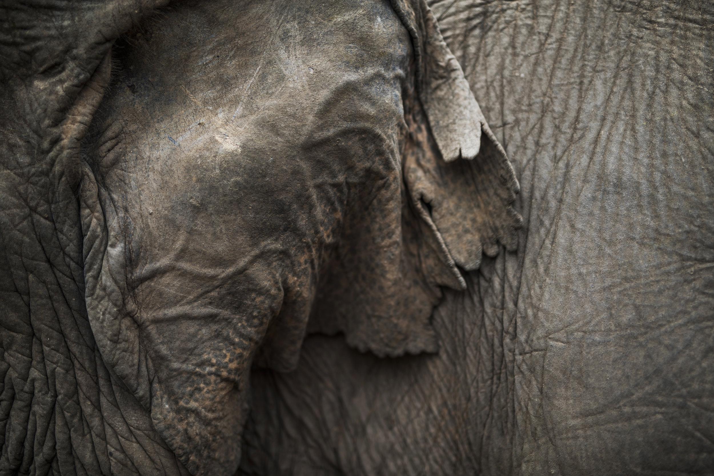 elephants (82).jpg