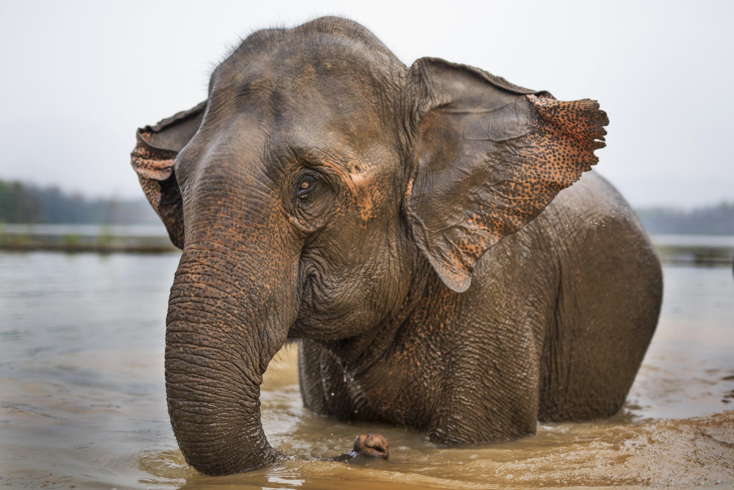 elephants (90).jpg