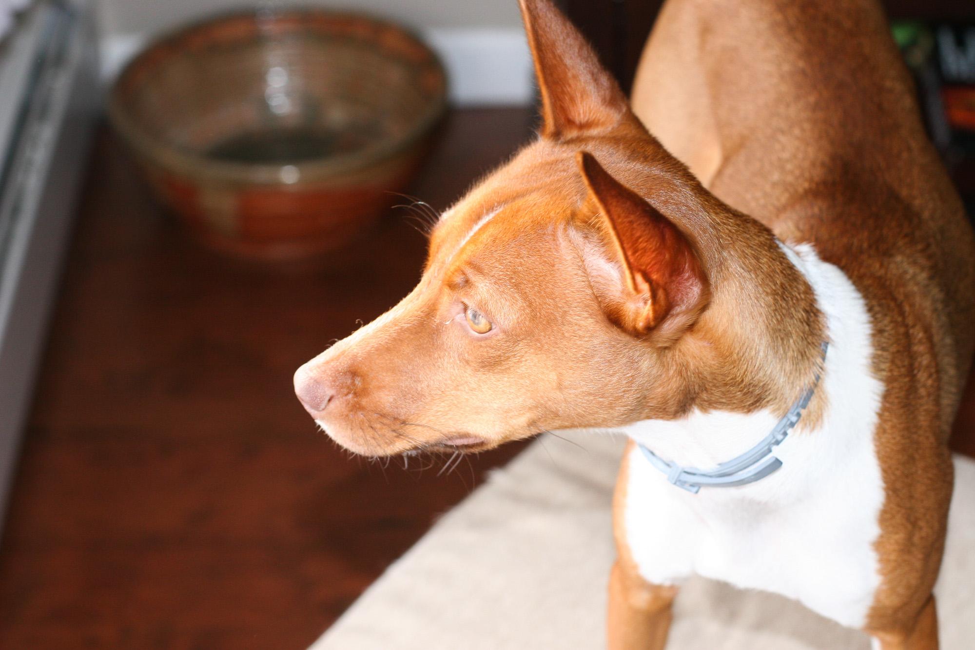 camera-settings-dog-photos-4.jpg