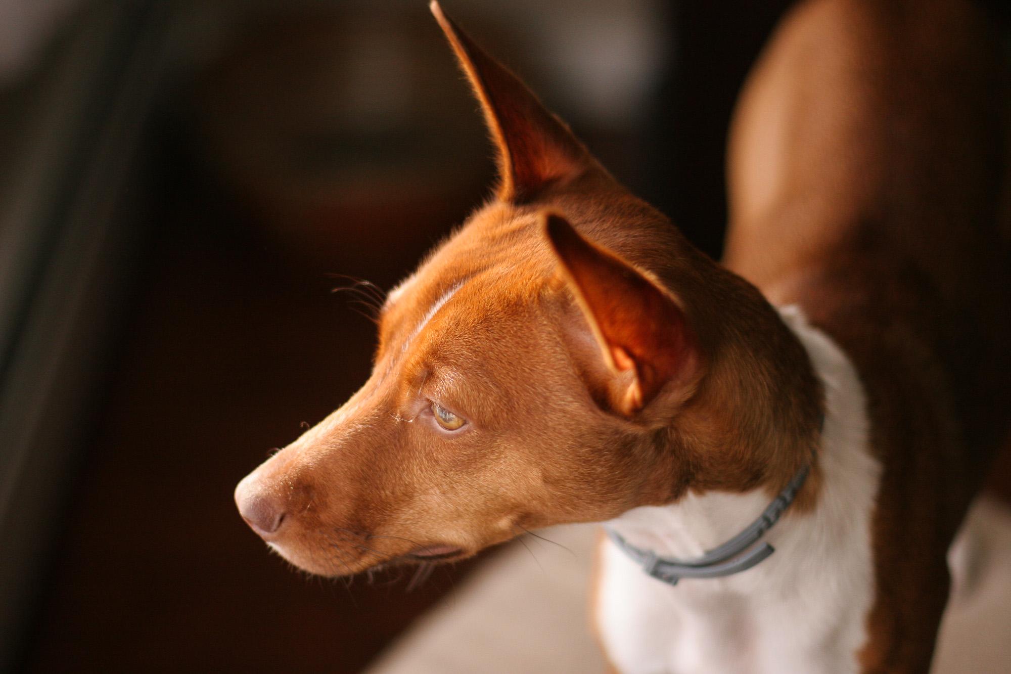 camera-settings-dog-photos-5.jpg