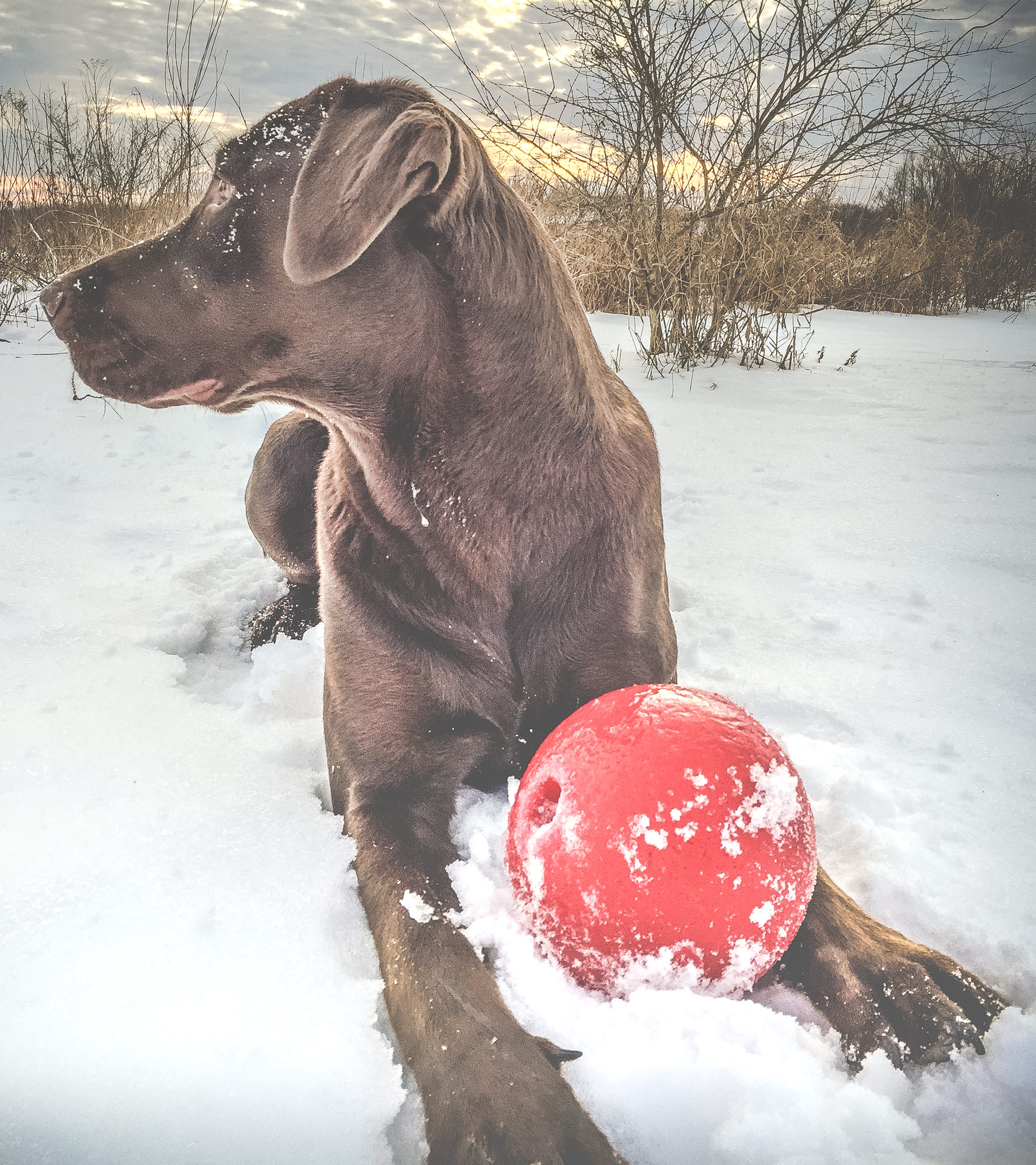 """Frank said I should call this one, """"Brown dog, Red ball"""". He's so artsy."""