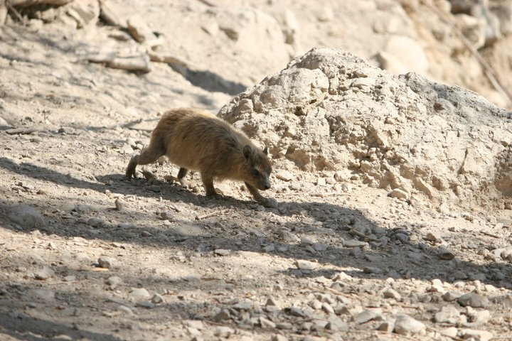 You would have never known I was super far away from this rock badger!